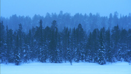 A winter forest in Lapland, 200 miles above the Arctic Circle