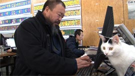 Ai Weiwei works on his computer in his Beijing home studio, as one of his dozens of cats looks on.