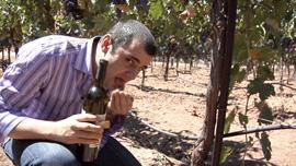 Wine expert Gary Vaynerchuck can taste terroir