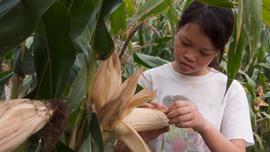 Qin helps grandmom with farm work.
