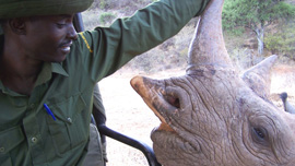 Kaparo, a community game ranger at Il Ngwesi, with a black rhino named Omni (Kenya)