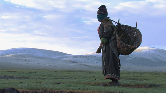 Yama collects yak dung in early morning